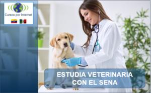 Especialización en veterinaria
